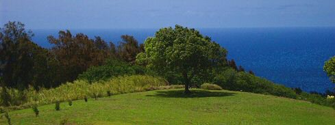 View of the Blue Pacific from the Naturopathic Retreat Center, Hamakua Coast, on the Big Island of Hawaii